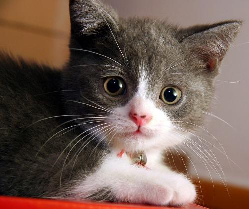 Copy of kitten